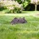 Sposób na kreta, mszyce i nornice w ogrodzie. Dowiedz się, jak pozbyć się szkodników z ogrodu