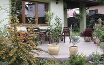 Przechowywanie przez zimę niecierpków, begonii i innych roślin z tarasu i balkonu