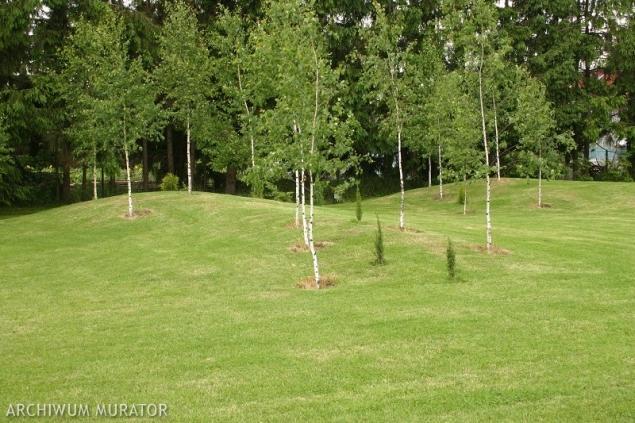 11 najczęstszych problemów z trawnikiem. Jak im zaradzić?
