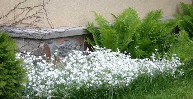 Wybór roślin do ogrodu